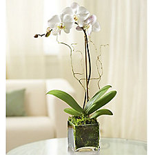 Elegant Orchid - Chase Business Banking