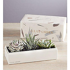Succulents by Lula's Garden - Chase Business Banking