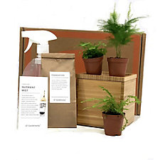 Desktop Fern Garden in Bamboo Planter