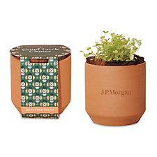 Modern Sprout Tiny Terracotta Grow Kit Good Luck Clover - J.P. Morgan