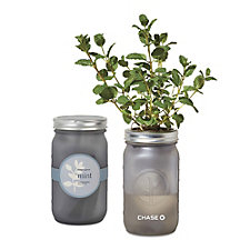 Modern Sprout Indoor Herb Garden Kit - Mint - Chase
