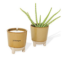 Modern Sprout Glow and Grow Live Well Gift Set - Aloe - J.P. Morgan