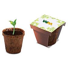 Sunflower Coco Starter Kit